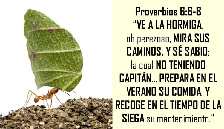 Proverbios 6.6-8