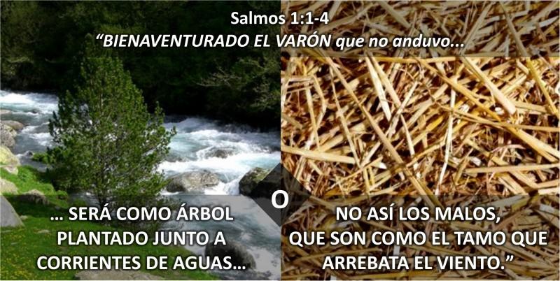 Entre el rbol y el tamo vida cristiana ministerio umcd for Cuales son los arboles perennes