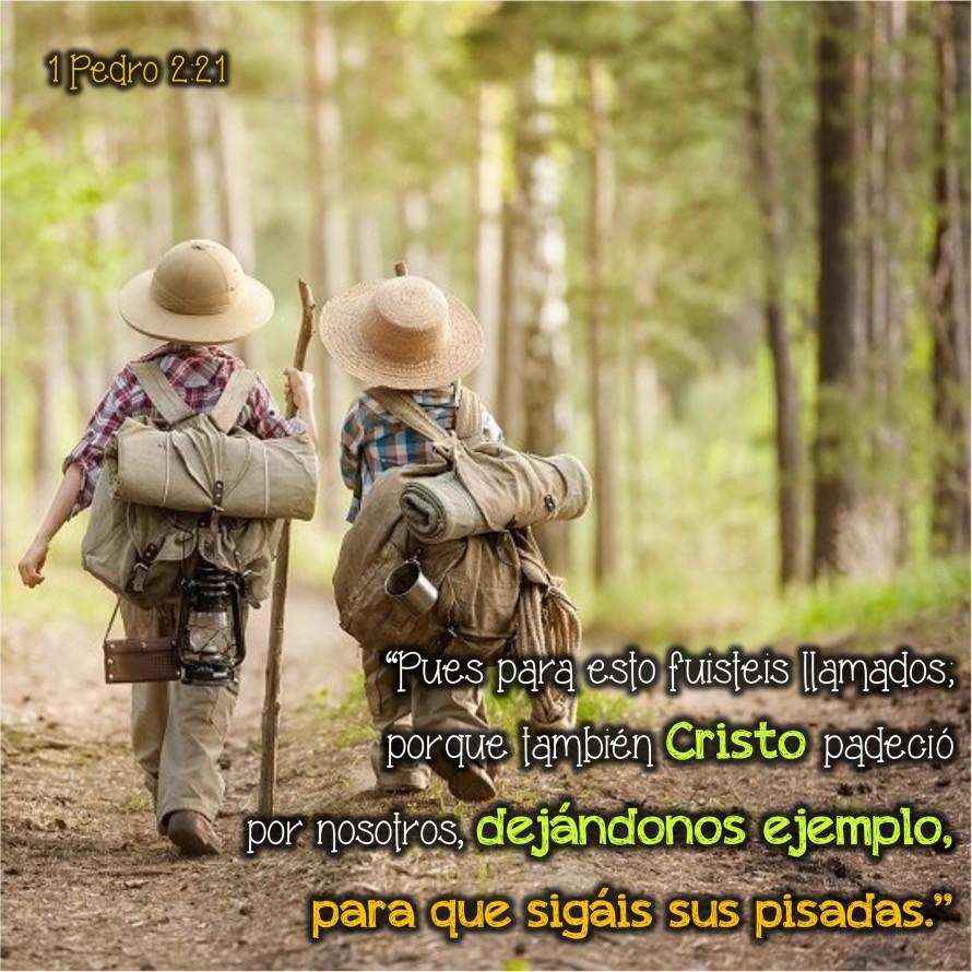 1 Pedro 2.21 Anexo