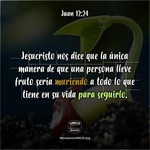 Juan 12.24 Color
